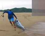VIDEO BATALLA EPICA CON UN PEZ GALLO / SURF FISHING